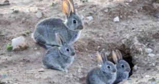 """Fallo del Juez Federal Calvete: """"Los Conejos del CADIC van a vivir"""""""