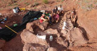 El nuevo dinosaurio argentino: ¿el animal más grande que pisó la Tierra?