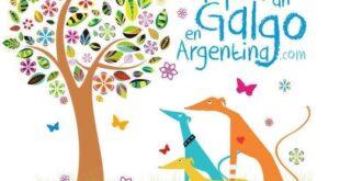 Alejandra Peralta: ¿Cómo adoptar un Galgo en Argentina?